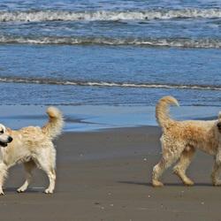 ontmoeting op het strand