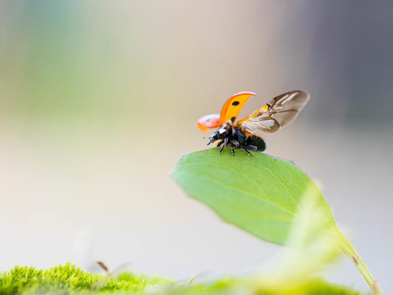 Fly, Ladybug Fly... -