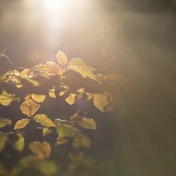 Catch the light - 4