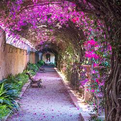 Jardim de Monforte