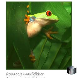Roodoog Makikikker