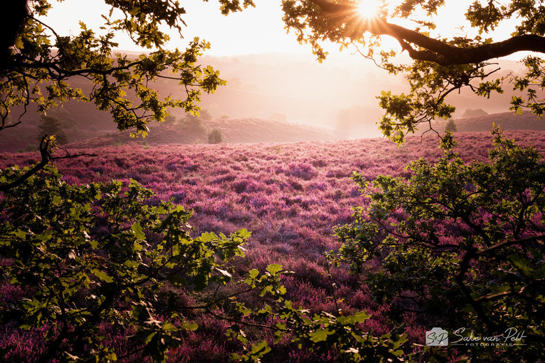 Posbank - Het leven van een fotograaf gaat niet altijd over rozen. Zo zijn we vanochtend, na een nacht van 5 uur slapen in een tentje, om 5 uur '