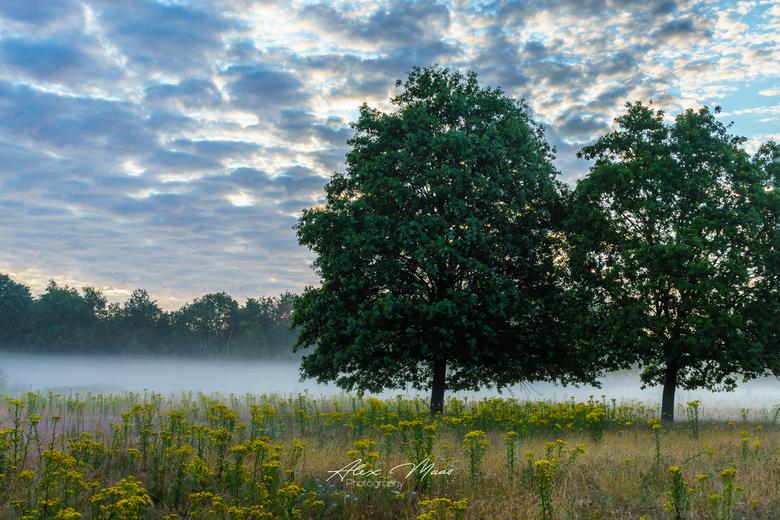 Misty Morning - Laaghangende nevel heel vroeg in de ochtend, met prachtige wolkenpartij op de achtergrond en bloemenveldje op de voorgrond
