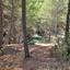 Het bos.....