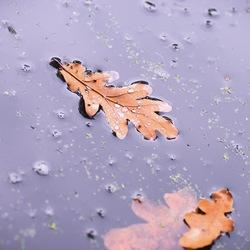Waterblad