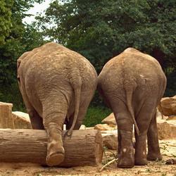 2 Vrienden in de Zoo