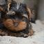 Puppy sol