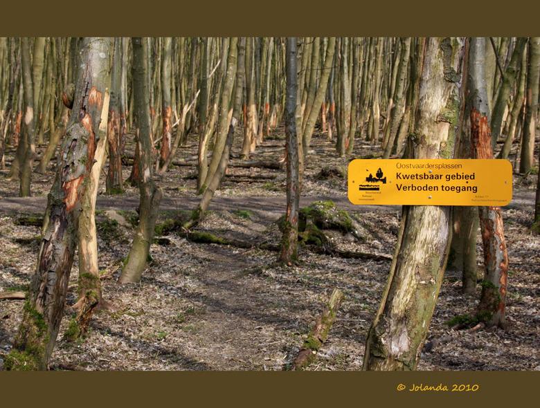 Kwetsbaar gebied - Na de afgelopen strenge winter waren de Oostvaardersplassen nog kwetsbaar gebied op een boel plekjes..<br /> Hoe kaal zijn de bome
