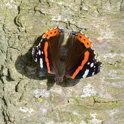 Zonnende vlinder 3