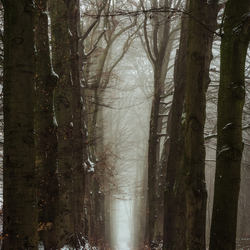 The depth of the dark forrest