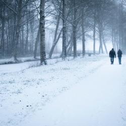 Koppel in een winters bos
