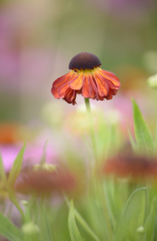 Geen zon, toch een hoed. - Eindelijk mijzelf, na een verbouwing in huis, nog niet helemaal af, weer tijd gegund om naar de Botanische Tuin in Utrecht