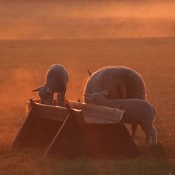 zonsopkomst op Texel