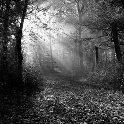 in de bossen