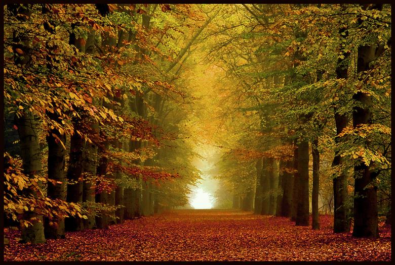Afbeeldingsresultaat voor herfstfoto