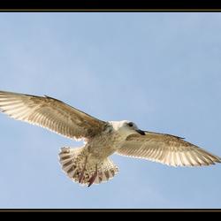 De vrijheid van een vogel