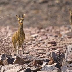 Namibië 8