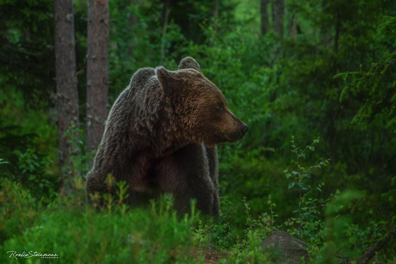 You can never be too careful - Een terugblik naar onze vakantiereis van vorig jaar. De beren, die hier in het wild leven, vond ik erg indrukwekkend. Z