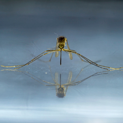 mosquito in the mirror@zoom