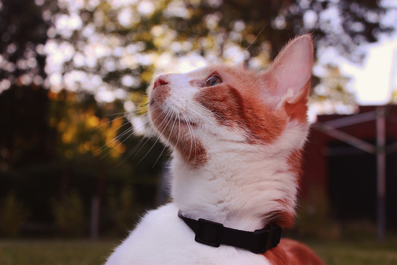 cat heaven - /