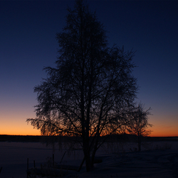 Eenzame boom bij zonsondergang