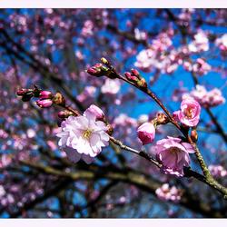 Lente in de Japanse tuin 10