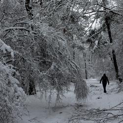 wondere wereld van sneeuw