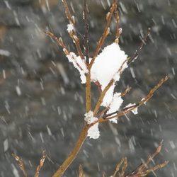 sneeuw in juni !