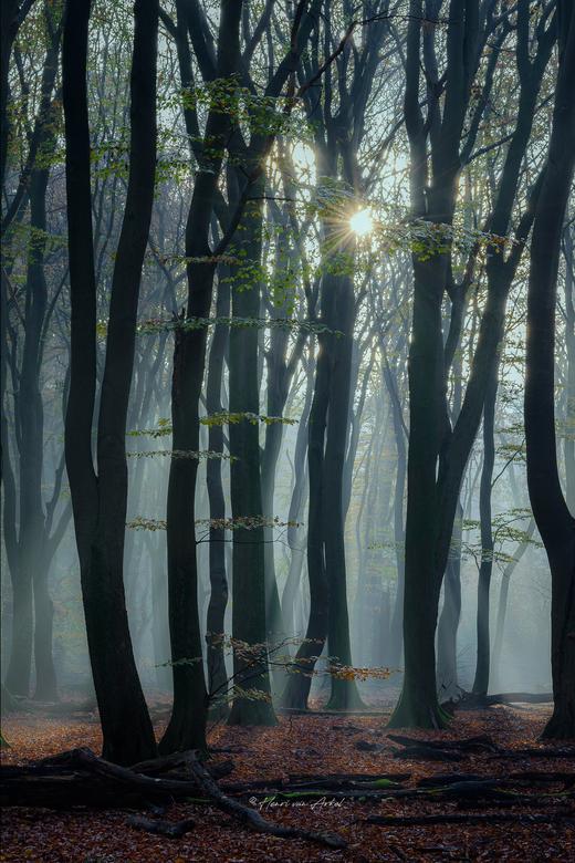 Speulderbos Mist - Een mistige ochtend bij het Speulderbos