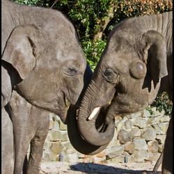 2 olifanten 2