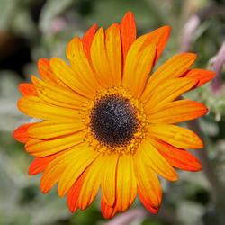Het oranje- en zomergevoel
