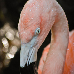 Het is roze en staat op een stok....