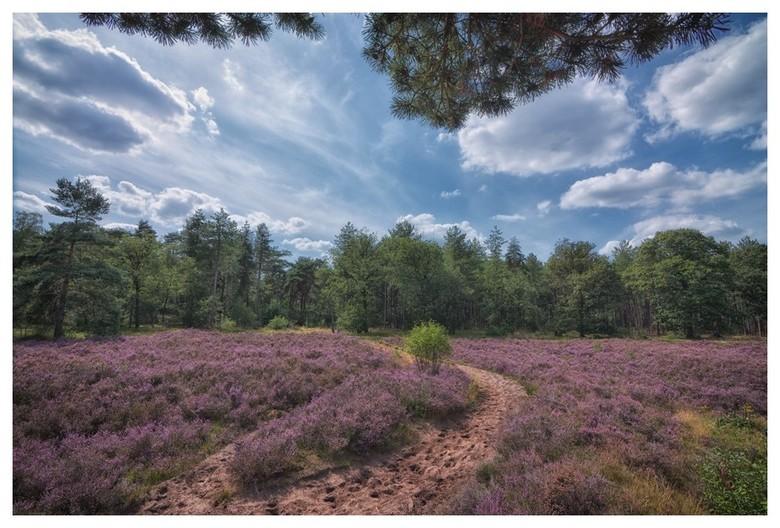 Heide - Heide