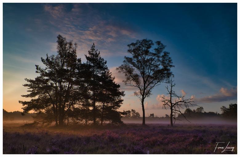 Buurserzand - Vroeg in de ochtend op een heideveld in het Buurserzand.