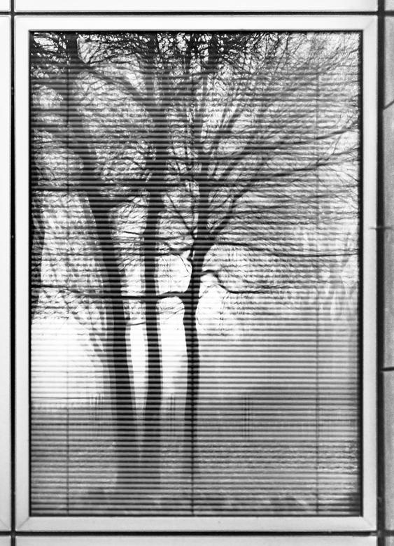 lamallae trees