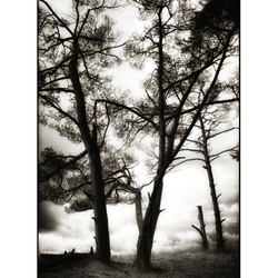Just some trees 01