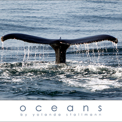 Oceans: Whale Tail