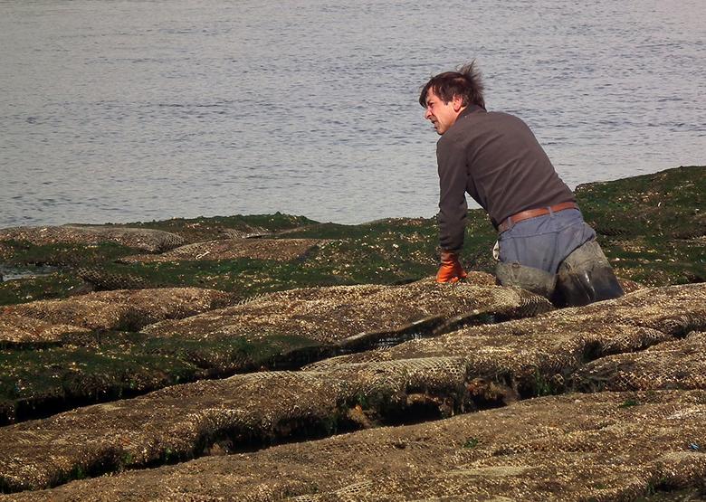 Oesterkweker in Bretagne - Eentje uit de oude doos. De Ria d'Étel in Bretagne is een plek waar het getij enorm kolkt, spektakel om naar te kijken