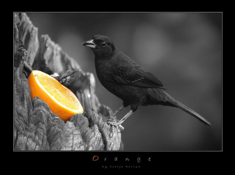 Orange - Ook bij deze foto niet zo heel veel uitleg nodig. Spreek weer voor zich, wel geinig is hoe de vogel verbaasd lijkt te kijken door de kleine b