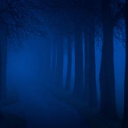 Mistige blue hour