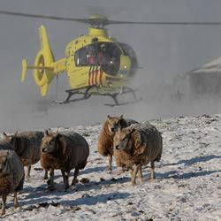 Traumahelikopter stijgt op boven weiland met sneeuwdek