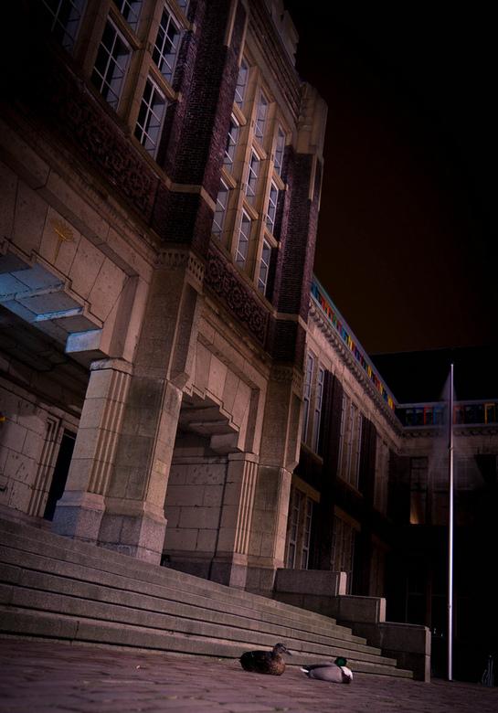 TU Delft Architechtuur afd. beschermd door eendjes! - Dit koppeltje kwam ik vannacht tegen toen ik een rondje door Delft aan't fietsen was. Ik ha