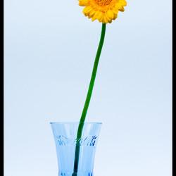 Gele bloem...