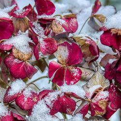 Sneeuw in Joure