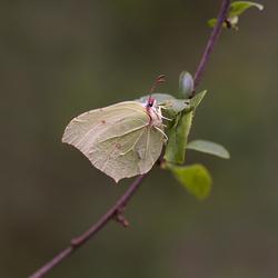 Butterfly.....