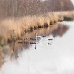 Fence in water