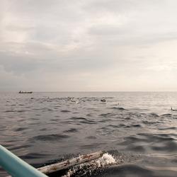 bali zee