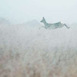 'Vliegend' hert
