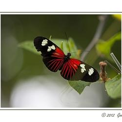 Vlinders 5