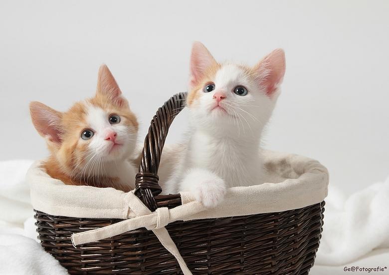mooie pussy Fotos
